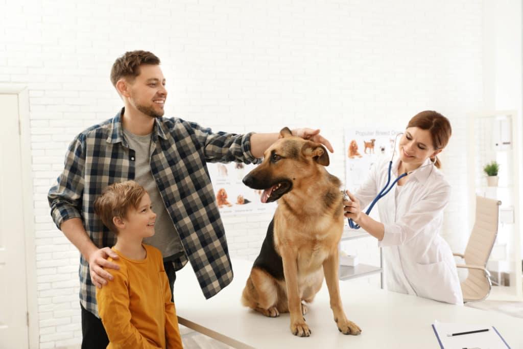 AnimEd Solutions - Visite chez le vétérinaire