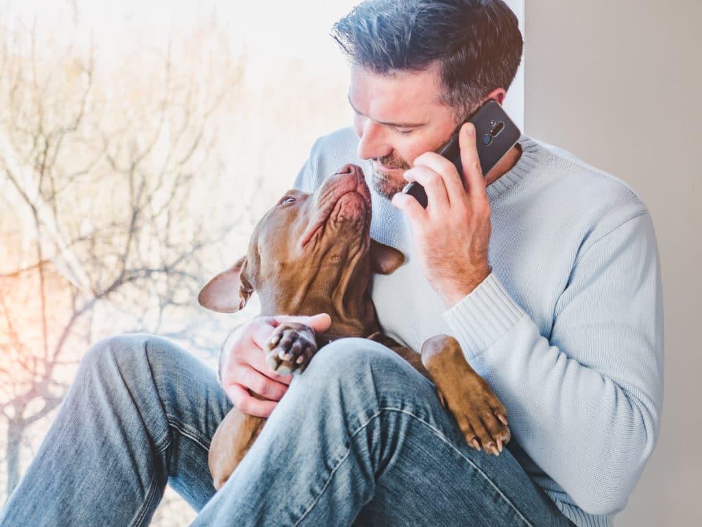 AnimEd Solutions - Chien malade - faire le suivi avec son vétérinaire
