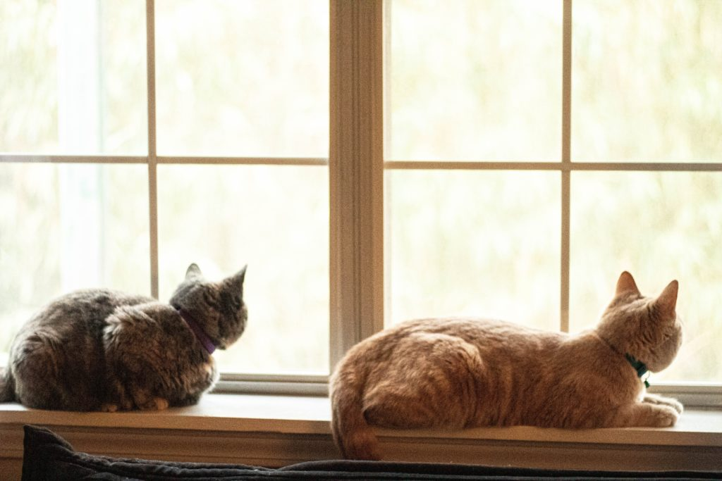 Animed Solutions - conseils vétérinaires adoption d'un chat