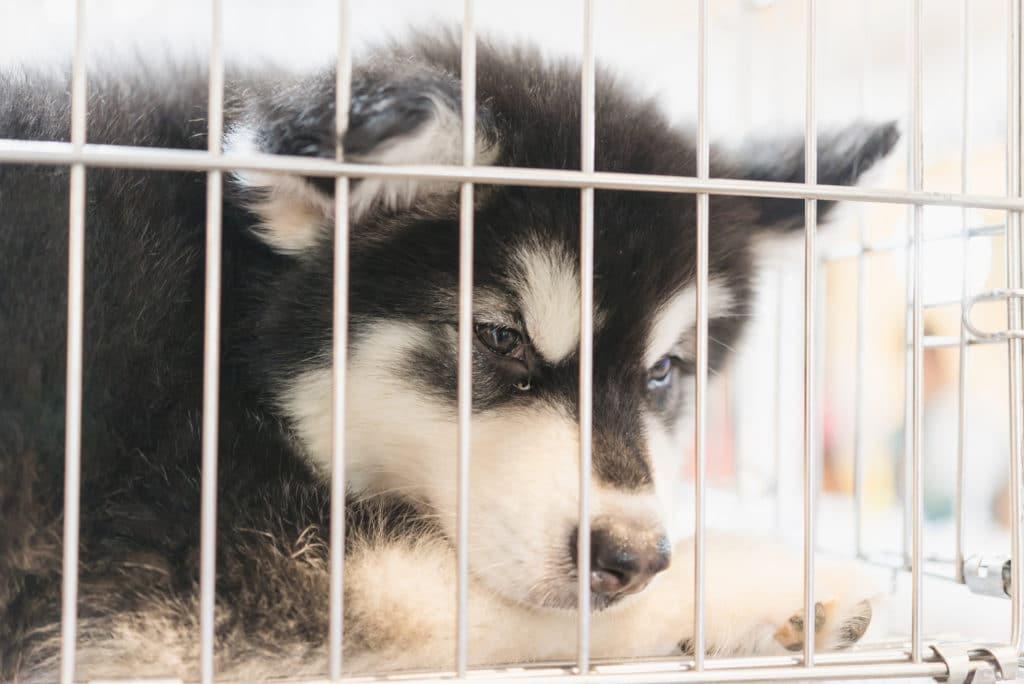 AnimEd Solutions - Où acheter son chien?