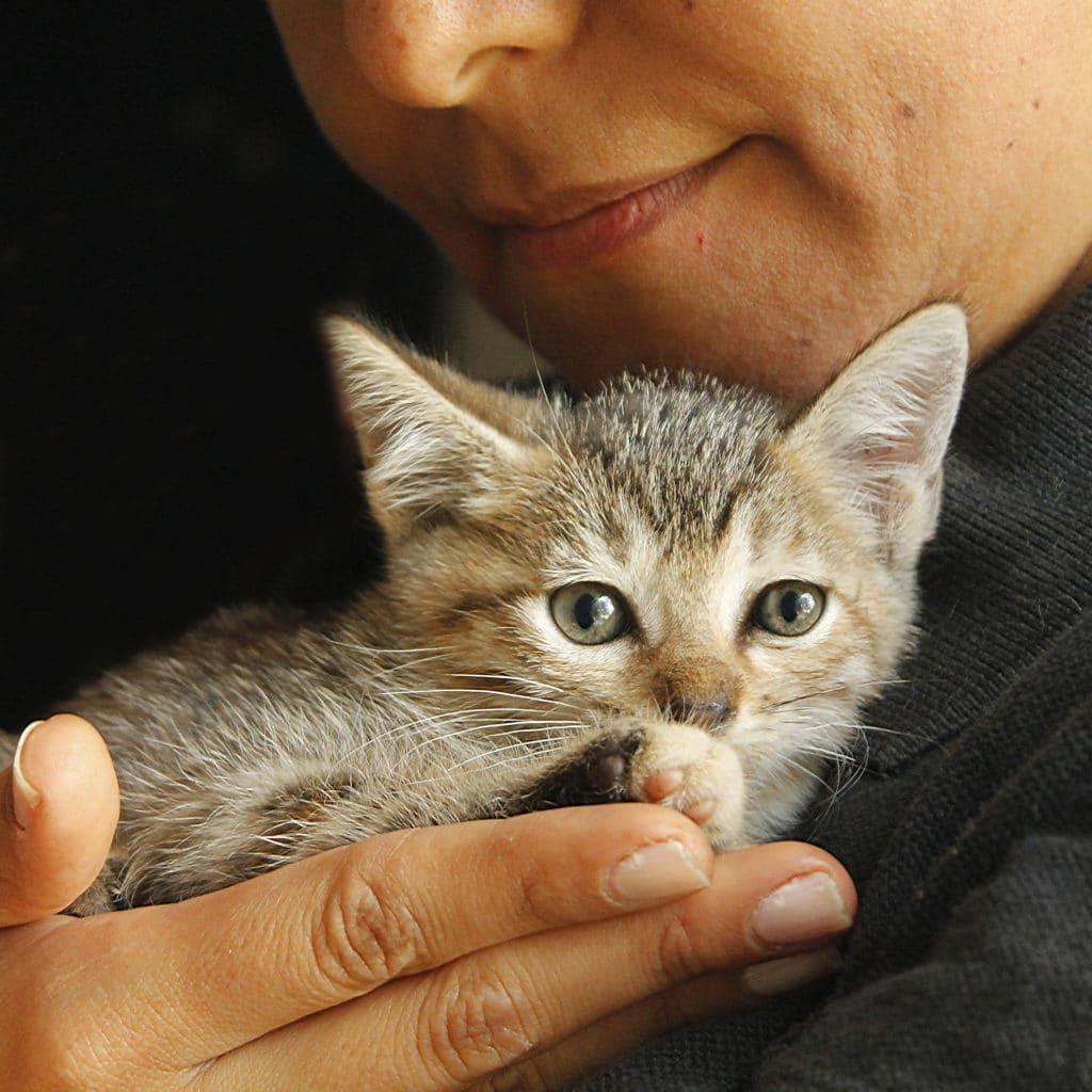 Conseil adoption chat en refuge