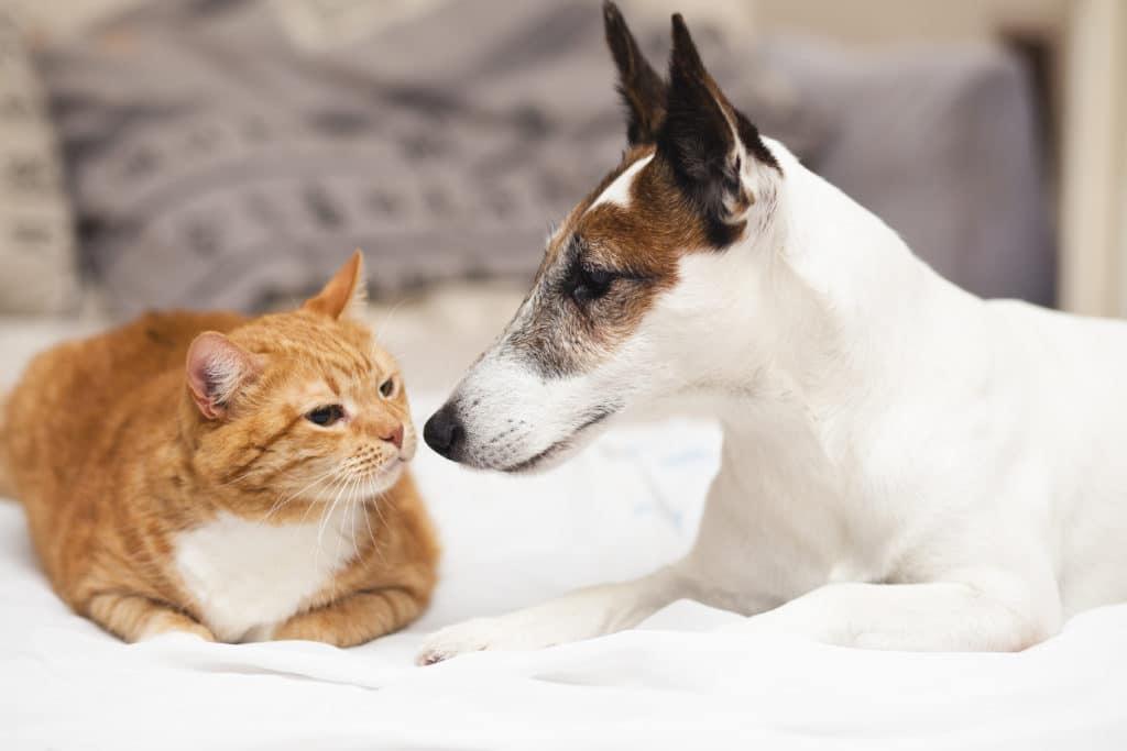 premiere rencontre chien et chaton site de rencontre canadien totalement gratuit