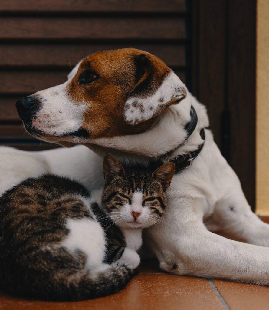 AnimEd Solutions - Conseils vétérinaires