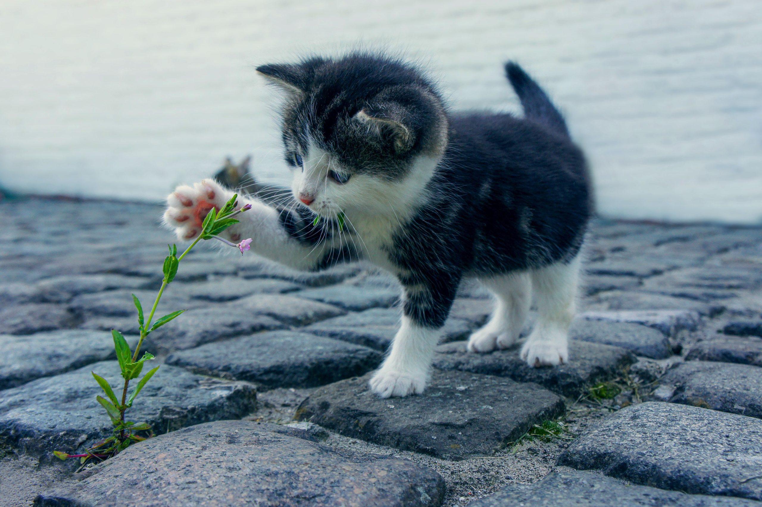 Accueillir votre nouveau chat - Conseils vétérinaires
