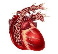 Conseil-vétérinaire - Vers du coeur