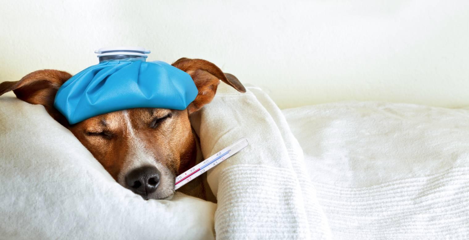 Chien malade - Vermifuge chien