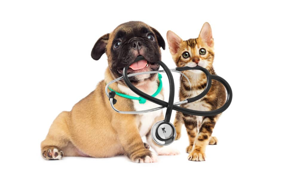 AnimEd Solutions - espace vétérinaires