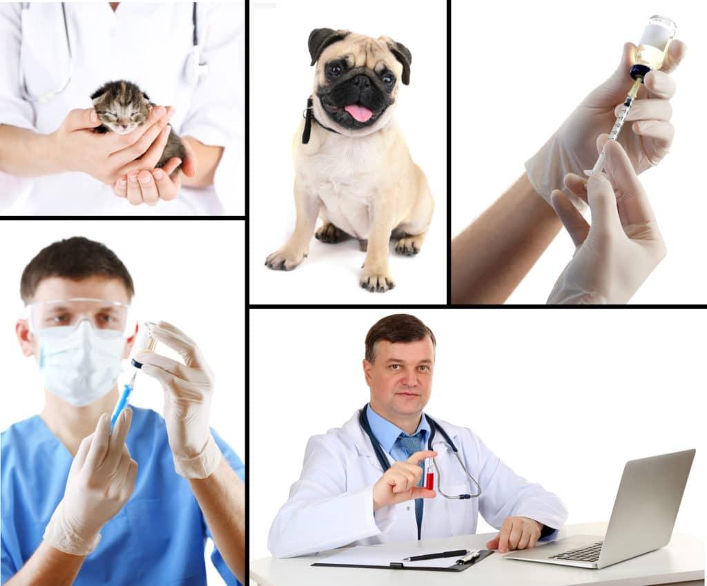 Conseil véto chien - AnimEd Solutions