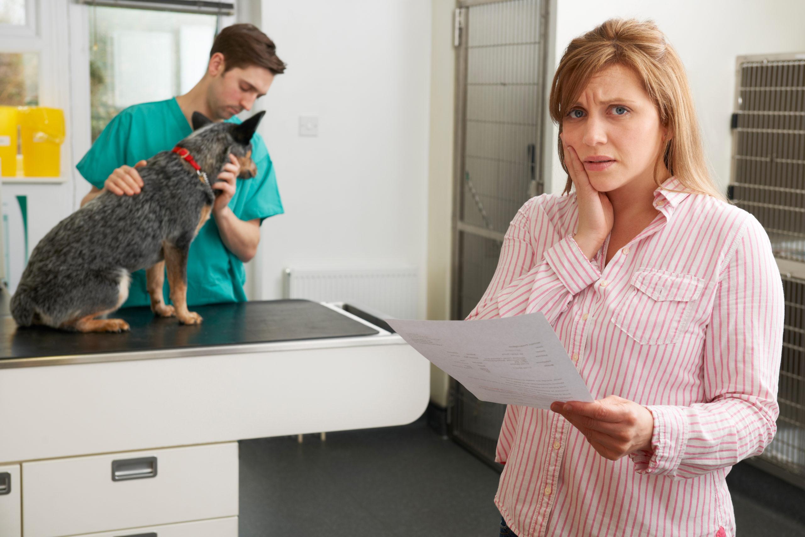 AnimEd : les couts de la médecine vétérinaire