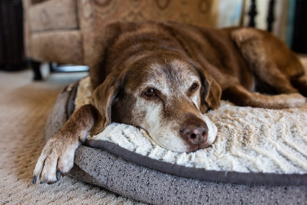 Vieux chien : comment améliorer sa vie