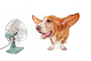 chien-devant-un-ventilateur-ouvert-avec-les-oreilles-en-lair