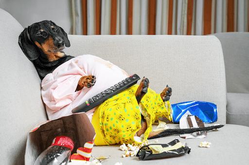 chien-obese-en-pyjama-affalé-sur-le-divan-avec-des-popcorns-autour-de-lui