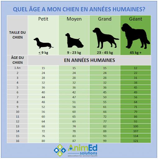tableau age des chiens en années humains