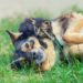 AnimEd Solutions - Présenter votre nouveau chaton à vos autres animaux de compagnie