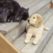 Animed solution Conseil chien (4)