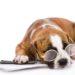 AnimEd Solutions - Conseils adoption d'un chien